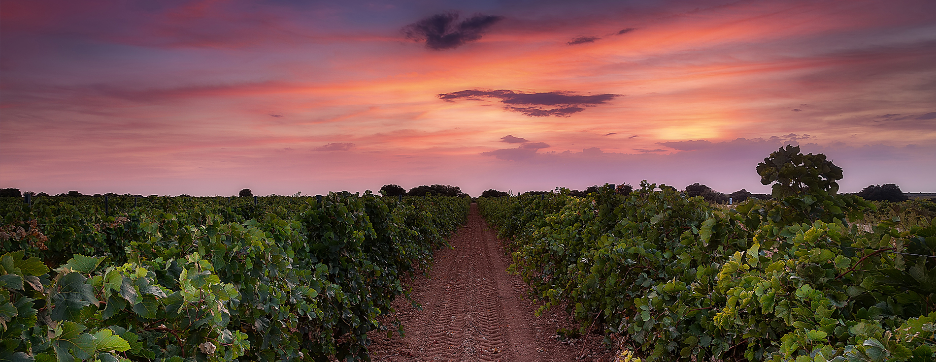Discover our Family of Fine Wines